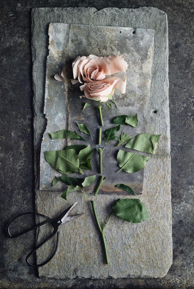 Jak se vyrovnat se smrtí toho nejbližšího aneb život jde dál a může být zase krásný